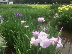 Kitayama Park in Higashimurayama-shi 33