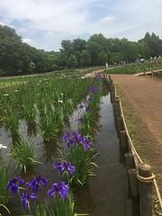 Kitayama Park in Higashimurayama-shi 22