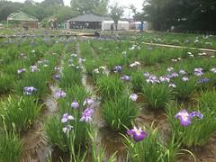 Kitayama Park in Higashimurayama-shi 9