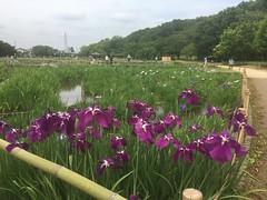 Kitayama Park in Higashimurayama-shi 2