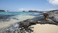 Crabs at Bartolome Island, Galapagos