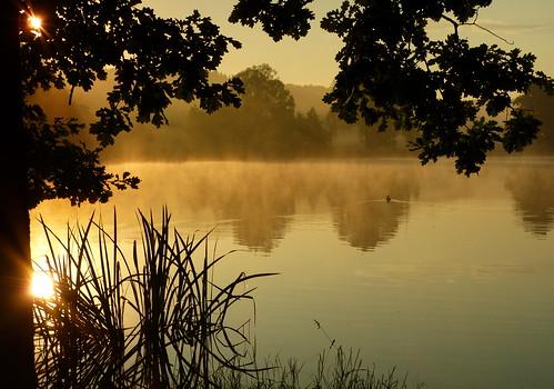 Sonntag-Morgen am Teich
