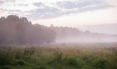 Early Morning in Ingendael