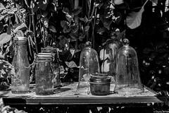 Jardin du brocanteur BARR juillet 2020