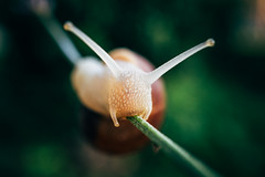 Close-up of a snail trying to survive in the forest on a flower stem