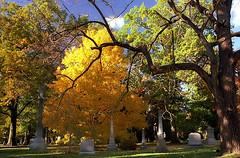 """Cincinnati - Spring Grove Cemetery & Arboretum """"Autumn Evening"""""""