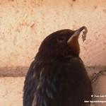 Aves en el Paseo del Norte. La Guardia (Toledo) 20-7-2020