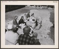 Farmers with their sheep at the agricultural fair in Windsor, Nova Scotia / Des agriculteurs avec leurs moutons lors d'une foire agricole à Windsor (Nouvelle-Écosse)
