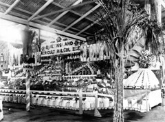 Queensland Agricultural College produce display at the Brisbane Show, 1906