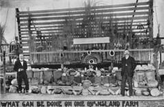 Agricultural display at the Bundaberg show, 1912