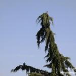 Aves en el Paseo del Norte de La Guardia (Toledo) 21-7-2020