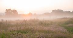 Sunrise in Ingendael