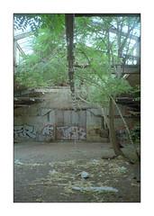 jungle berlin