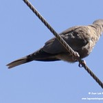 Aves en las lagunas de La Guardia (Toledo) 22-7-2020