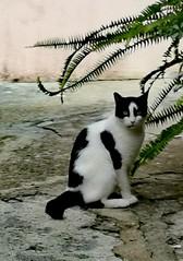Gatti, gattini e company
