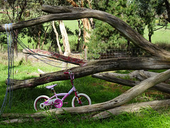Bicycle and Branches