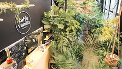 caffe vanilla - Flower Space Gravel.