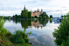 Swans in front of the Schwerin castle with reflection in the water