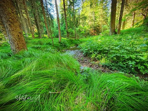 Waldspaziergang (1)