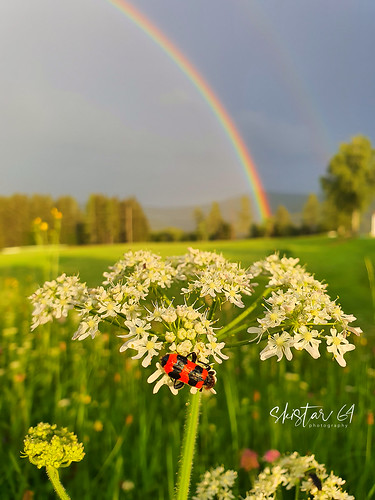 Regenbogen (1)