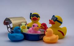 Hauptsache Wasser, wo das ist den Enten egal!!