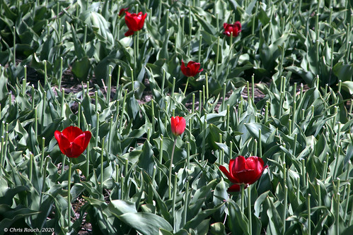 Sparse flowers