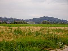 Monts des Flandres vus de Hondeghem (2) - Photo of Strazeele