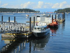 Vancouver Island Whale Watch