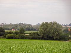 Monts des Flandres vus de Hondeghem (3) - Photo of Strazeele