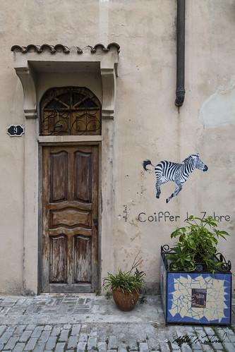 Coiffer le Zebra_MG_4464
