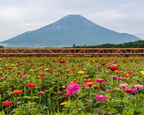 2020 summer Fuji