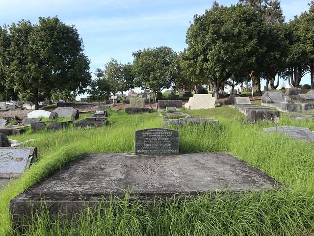 Photo:Presbyterian Division D, Row 22, Plots 14 & 16 By Discover Waikumete Cemetery