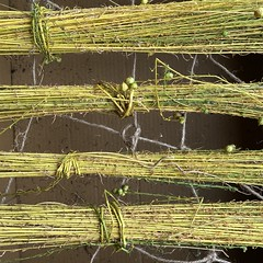 Flax drying update