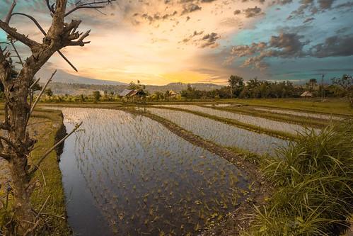 Bali in the morning