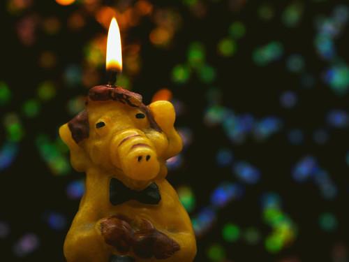 Alf geht ein Licht auf!  / Alf lights up!