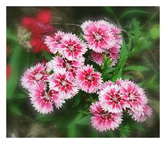 Tiny Flowers Close to the Ground