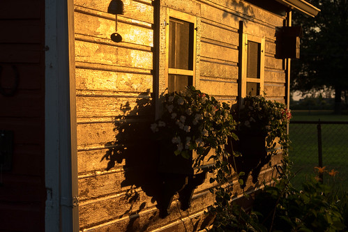 Sunset on Shed