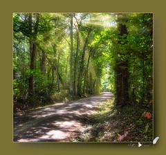 Forêt/Sous-bois