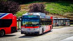 WMATA Metrobus 2019 New Flyer Xcelsior XD40 #4458