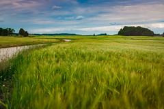 Calm And Flat Landscape of Summer Countryside Meadow