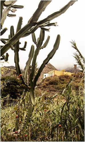 258- PAISAJE EN LA HORMIGUA - LA GOMERA- (Canarias)