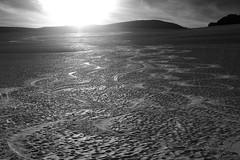 Ski tracks on Juneau Icefield