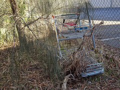 Shopping Trolley Going Back to Nature