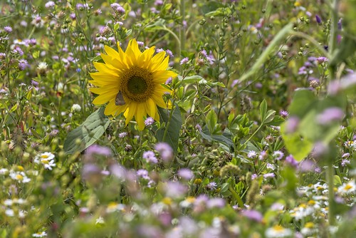 *wildflower - meeting II*