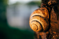 Close-up picture of a snail shell on a tree illuminated by sunlight