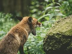 Wildpark Eekholt - Schleswig-Holstein - 8. Juli 2019