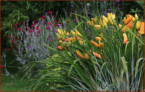 Dans le jardin de Claudine, Dolembreux, Belgique
