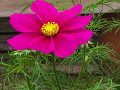 Thursday flower