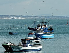 Fishing boat coming back from  a day's fishing in the sea surrounded by seagulls