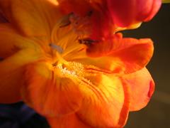 FREZII2010_0303_155331